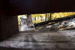 Gato con las hojas de otoño Imagen de archivo libre de regalías