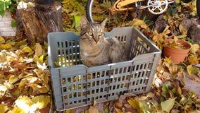 Gato con las hojas del árbol Foto de archivo libre de regalías