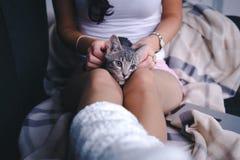 Gato con las manos de la mujer Fotos de archivo libres de regalías