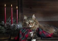 Gato con las velas de la bufanda y de la Navidad del día de fiesta imagen de archivo
