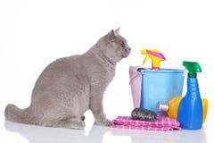 Gato con los agentes de limpieza foto de archivo
