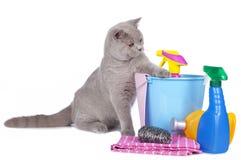 Gato con los agentes de limpieza Fotografía de archivo