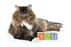 Gato con los bloques que deletrea el gato 2 Fotografía de archivo libre de regalías