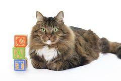 Gato con los bloques que deletrea el gato Fotos de archivo
