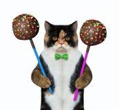 Gato con los estallidos 2 de la torta de chocolate fotografía de archivo libre de regalías