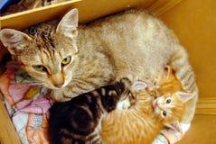 Gato con los gatitos imagenes de archivo