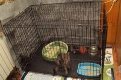 Gato con los gatitos en el refugio para animales Imagen de archivo libre de regalías