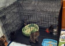 Gato con los gatitos en una jaula en los dueños que esperan del refugio del gato para Imágenes de archivo libres de regalías