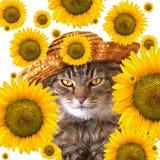 Gato con los girasoles Imagen de archivo libre de regalías