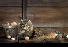 Gato con los huevos del pollo imagenes de archivo
