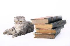 Gato con los libros viejos Foto de archivo libre de regalías