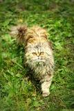 Gato con los ojos abiertos de par en par en la hierba Fotografía de archivo