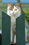 Gato con los ojos amarillos Imagenes de archivo