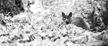 Gato con los ojos amarillos Fotos de archivo