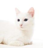 Gato con los ojos azules Foto de archivo libre de regalías