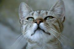 Gato con los ojos hermosos Foto de archivo libre de regalías