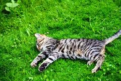 gato con los ojos que sorprenden en hierba verde fotos de archivo