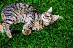 gato con los ojos que sorprenden en hierba verde imagen de archivo
