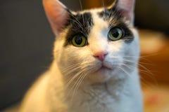 Gato con los ojos verdes imagenes de archivo
