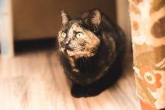 Gato con los ojos verdes Fotos de archivo