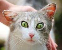 Gato con los ojos verdes Foto de archivo libre de regalías