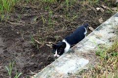 Gato con mirada siniestra Fotografía de archivo