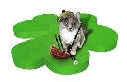 Gato con símbolos nacionales de Escocia Fotos de archivo