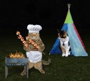 Gato con su amante en la comida campestre 2 imagenes de archivo