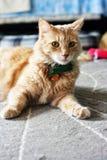 Gato con un arco Imágenes de archivo libres de regalías