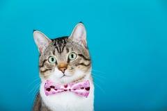 Gato con un arco que se sienta y que mira a la cámara Imagen de archivo