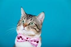 Gato con un arco que se sienta y que mira a la cámara imágenes de archivo libres de regalías