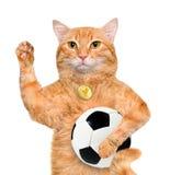 Gato con un balón de fútbol blanco Foto de archivo libre de regalías