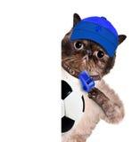 Gato con un balón de fútbol blanco. Fotografía de archivo