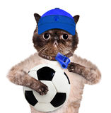 Gato con un balón de fútbol blanco Foto de archivo