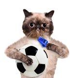 Gato con un balón de fútbol blanco Imagenes de archivo