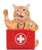 Gato con un equipo de primeros auxilios fotografía de archivo libre de regalías