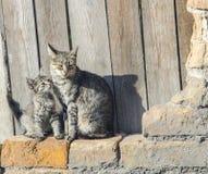 Gato con un gatito Fotografía de archivo