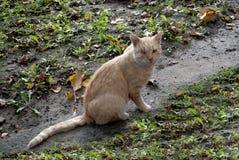 Gato con un ojo foto de archivo