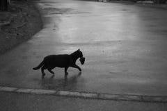 Gato con un pescado en su boca Foto de archivo
