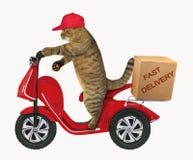 Gato con una caja en la vespa imágenes de archivo libres de regalías