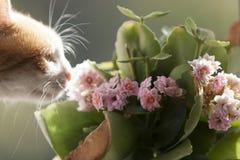 Gato con una flor Foto de archivo libre de regalías
