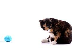 Gato con una lana Fotografía de archivo libre de regalías