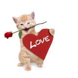 Gato con una rosa roja y un corazón rojo Imagenes de archivo
