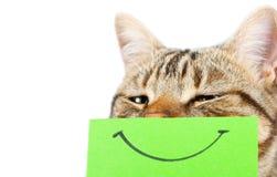 Gato con una sonrisa foto de archivo