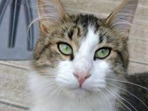 Gato confiado fotografía de archivo