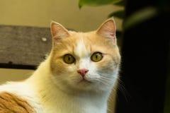 Gato consideravelmente vermelho Fotos de Stock