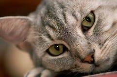 Gato contemplativo Foto de archivo
