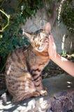 Gato contento que es animal doméstico del ser humano Imagen de archivo libre de regalías