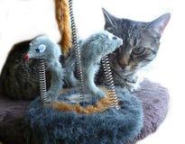 Gato contra rato Fotografia de Stock