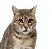 Gato (criança de 4 anos) Foto de Stock